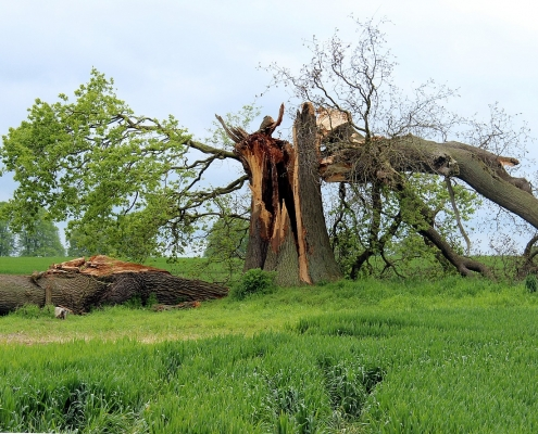 storm damage tree blown over